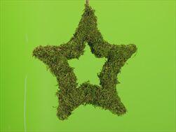 Mechová Hvězda Otevřené na Pověšení Zelená 25cm - velkoobchod, dovoz květin, řezané květiny Brno