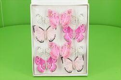 Motýl 10ks růžový - velkoobchod, dovoz květin, řezané květiny Brno