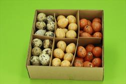 Vajíčko křepelčí oranžové 3cm 72 ks - velkoobchod, dovoz květin, řezané květiny Brno