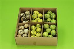 Vajíčko křepelčí zelené 3cm 72 ks - velkoobchod, dovoz květin, řezané květiny Brno