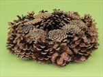 Kruh šiškový lakovaný 25cm - velkoobchod, dovoz květin, řezané květiny Brno