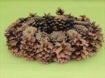 Kruh šiškový lakovaný 30cm - velkoobchod, dovoz květin, řezané květiny Brno