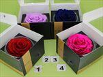 Růže stabilizovaná - květ - velkoobchod, dovoz květin, řezané květiny Brno