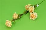 Uk růže větev pěna - velkoobchod, dovoz květin, řezané květiny Brno