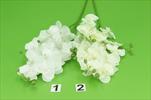 UK orchidea x2 75cm - velkoobchod, dovoz květin, řezané květiny Brno