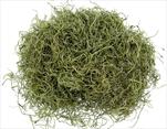 SU Tillandsie Jablkovo-zelená 0,6kg - velkoobchod, dovoz květin, řezané květiny Brno