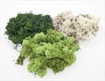 SU Islandský Mech Stabilizovaný zelený 1kg - velkoobchod, dovoz květin, řezané květiny Brno