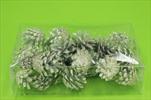 Su šišky borovice natur bělená 0,2kg - velkoobchod, dovoz květin, řezané květiny Brno