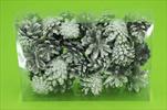 Su šišky borovice stříbrná 0,3kg - velkoobchod, dovoz květin, řezané květiny Brno