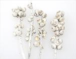 SU Větev Žaludová Whitewashed 0,6kg - velkoobchod, dovoz květin, řezané květiny Brno