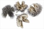 Kaštanové Skořápky Whitewashed 20ks - velkoobchod, dovoz květin, řezané květiny Brno