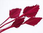 SU Palmspear Mini Frosted Červený 100ks - velkoobchod, dovoz květin, řezané květiny Brno