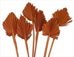 SU Palmspear Mini Frosted Oranžový 100ks - velkoobchod, dovoz květin, řezané květiny Brno