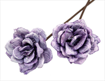 SU Růže Pinie Frosted Brombeer 8cm 8ks - velkoobchod, dovoz květin, řezané květiny Brno