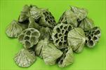 Su lotos střední 20ks oliva-stříbro - velkoobchod, dovoz květin, řezané květiny Brno