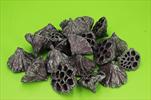 Su lotos střední 20ks brombeer-stříbro - velkoobchod, dovoz květin, řezané květiny Brno