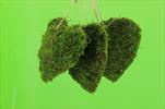 Srdce mech 15cm/4ks - velkoobchod, dovoz květin, řezané květiny Brno