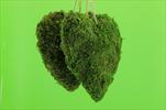 Srdce mech 20cm/2ks - velkoobchod, dovoz květin, řezané květiny Brno