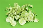 Su kalix 50ks kiwi - velkoobchod, dovoz květin, řezané květiny Brno