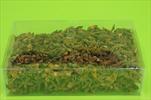 Su badyán 0,25kg - velkoobchod, dovoz květin, řezané květiny Brno