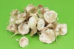 Su kalix rosa 50ks - velkoobchod, dovoz květin, řezané květiny Brno