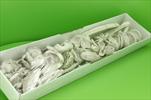 Su sušina mix 40ks krémová - velkoobchod, dovoz květin, řezané květiny Brno
