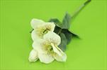 Uk Heleborus 3 květy 34cm krémový - velkoobchod, dovoz květin, řezané květiny Brno