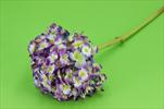 Uk Hortenzie mini květ 52cm - velkoobchod, dovoz květin, řezané květiny Brno