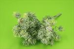 Uk Modřín 30cm glitr - velkoobchod, dovoz květin, řezané květiny Brno