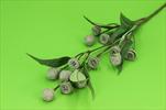 Uk Eucalyptus 71cm - velkoobchod, dovoz květin, řezané květiny Brno