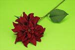 Uk Poinsettia 61cm burgundy - velkoobchod, dovoz květin, řezané květiny Brno