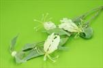 Uk Gloriosa 100cm cream - velkoobchod, dovoz květin, řezané květiny Brno