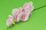Uk orchidea latex 86cm - velkoobchod, dovoz květin, řezané květiny Brno