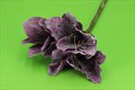 Uk Amarylis glitr 49cm tmavě fialový - velkoobchod, dovoz květin, řezané květiny Brno
