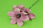 Uk Magnolia glitr 45cm tmavě růžová - velkoobchod, dovoz květin, řezané květiny Brno