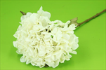 Uk hortenzie 63cm sušený vzhled krémová - velkoobchod, dovoz květin, řezané květiny Brno
