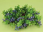 UK věnec borůvky prům. 23cm - velkoobchod, dovoz květin, řezané květiny Brno