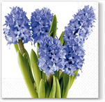 Do Ubrousky s hyacinty - velkoobchod, dovoz květin, řezané květiny Brno