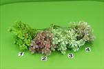 UK kytice plast.x5 33cm - velkoobchod, dovoz květin, řezané květiny Brno