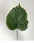 Uk list frost 16cm - velkoobchod, dovoz květin, řezané květiny Brno