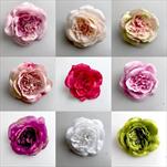 UK růže vazb. květ 11cm - Mary Rose - velkoobchod, dovoz květin, řezané květiny Brno
