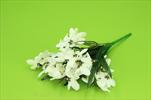 Uk sněženka x5 - velkoobchod, dovoz květin, řezané květiny Brno