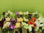 Uk magnolie 95cm - velkoobchod, dovoz květin, řezané květiny Brno