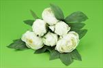 Uk Pivonka 25cm - velkoobchod, dovoz květin, řezané květiny Brno