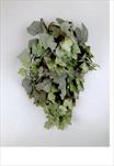 UK víno pop.frost 60cm - velkoobchod, dovoz květin, řezané květiny Brno