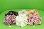 UK květ hortenzie 14cm - velkoobchod, dovoz květin, řezané květiny Brno