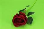 Uk Růže velvet 60cm - velkoobchod, dovoz květin, řezané květiny Brno