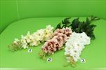 Uk Ostrožka lux - velkoobchod, dovoz květin, řezané květiny Brno