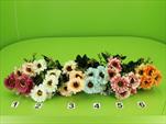 Uk kytice kopretina - velkoobchod, dovoz květin, řezané květiny Brno