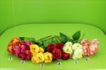 Uk kytice tulipán - velkoobchod, dovoz květin, řezané květiny Brno